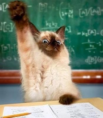 勉強をする猫